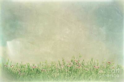 Photograph - Vintage Picture Of Summer Meadow Flowers In Green Grass. by Michal Bednarek