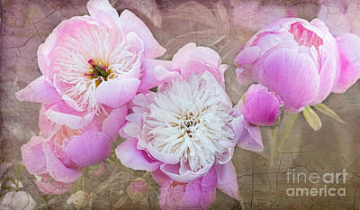 Photograph - Vintage Pink Peonies by Barbara McMahon