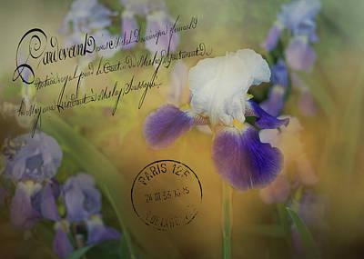 Photograph - Vintage Purple Irises by TnBackroadsPhotos