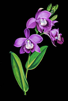 Photograph - Vintage Purple  Orchidx by Tom Prendergast