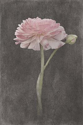 Wall Art - Mixed Media - Fluer D'amour - Ranunculus II by Amanda Lakey