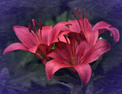 Photograph - Vintage Red Lillies by Richard Cummings