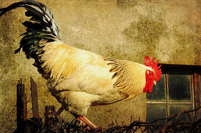 Vintage Rooster Art Print by Gary Smith