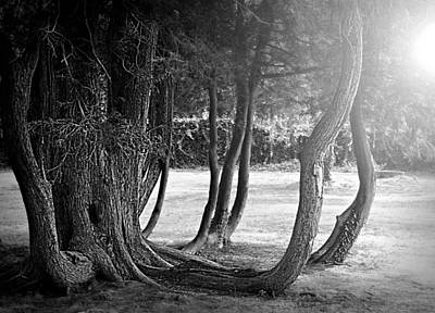 Photograph - Vintage Roots by Diana Angstadt