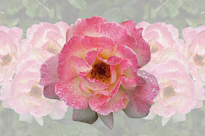 Photograph - Vintage Rose by Gill Billington