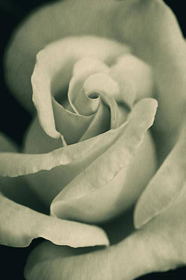 Photograph - Vintage Rose In Green by Jennie Marie Schell