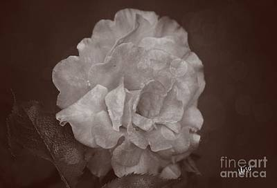 Photograph - Vintage Rose by Maria Urso