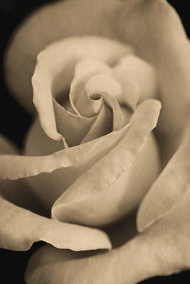 Photograph - Vintage Brown Rose Portrait by Jennie Marie Schell