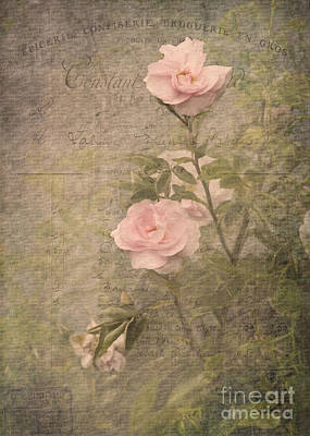 Photograph - Vintage Rose Poster by Liz  Alderdice