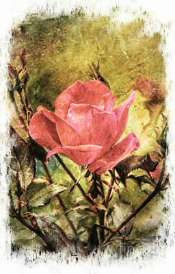 Vintage Rose Art Print by Tina  LeCour