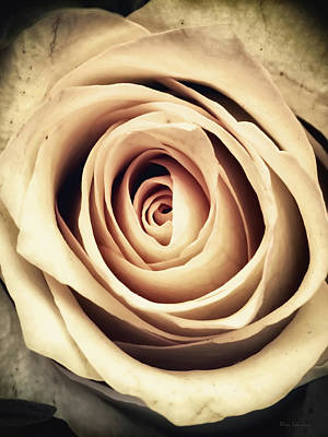 Photograph - Vintage Rose by Wim Lanclus