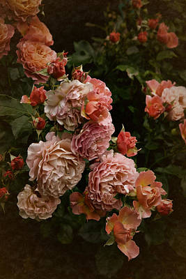 Photograph - Vintage Roses, 6.17 by Richard Cummings
