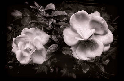 Photograph - Vintage Roses In Antique Tones No 2 by Louise Kumpf