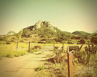 Photograph - Vintage San Luis Obispo California Seven Sisters  by Artist and Photographer Laura Wrede
