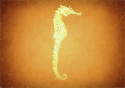 Scuba Mixed Media - Vintage Seahorse by Dan Sproul