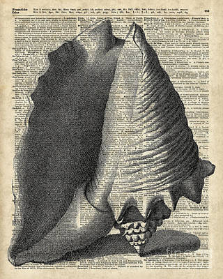 Vintage Shell Over Dictionary Book Page Art Print