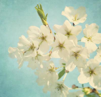 Vintage Spring Blossoms Art Print by Kim Hojnacki