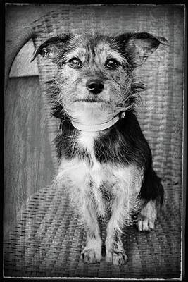 Photograph - Vintage Style Dog Portrait by Angie Tirado