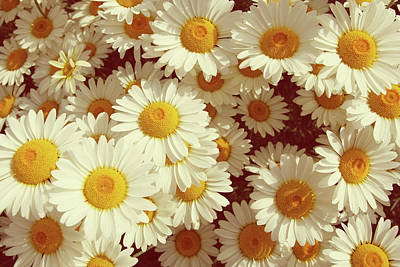 Photograph - Vintage Summer Daisies by Steve Ball