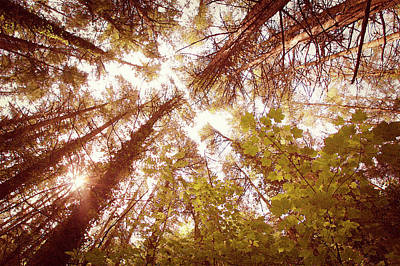 Photograph - Vintage Summer Trees by Steve Ball