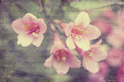 Digital Art - Vintage Spring Weigela by Trina Ansel