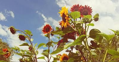 Western Photograph - Vintage Sunflowers by Amanda Smith