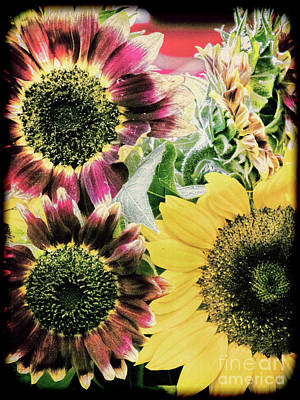 Photograph - Vintage Sunflowers by Karen Lewis