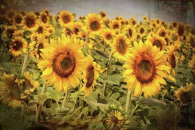 Photograph - Vintage Sunflowers - Yellow Wall Art by Joann Vitali