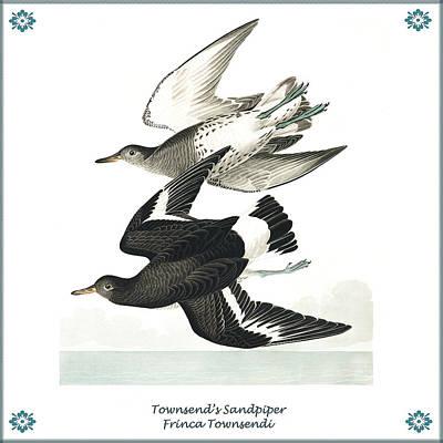 Sandpiper Digital Art - Vintage Townsends Sandpiper Audubon by Joy McKenzie