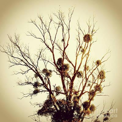 Colored Background Photograph - Vintage Tree by Bernard Jaubert