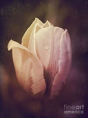 Photograph - Vintage Tulip by Mary-Lee Sanders