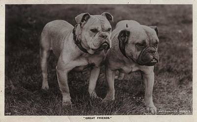 Vintage Two Bulldogs Art Print by Gillham Studios
