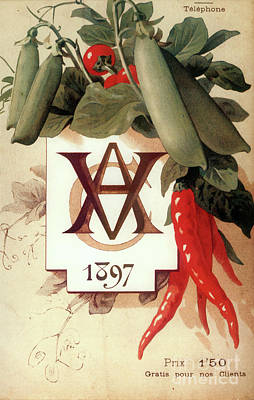 Chili Painting - Vintage Vegetables Paris Poster Rare by Mindy Sommers