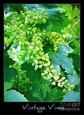 Blue Grapes Photograph - Vintage Vines  by Carol Groenen