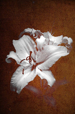 Photograph - Vintage White Lilies by Jenny Rainbow