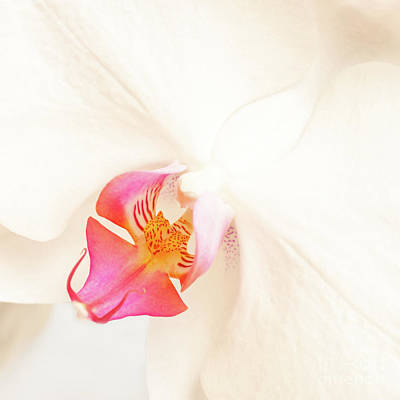 Phalaenopsis Photograph - White Orchid by Delphimages Photo Creations