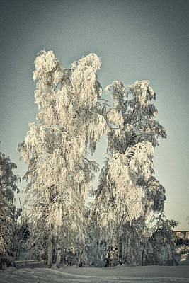 Photograph - Stately Winter Birches - Vintage by Cathy Mahnke