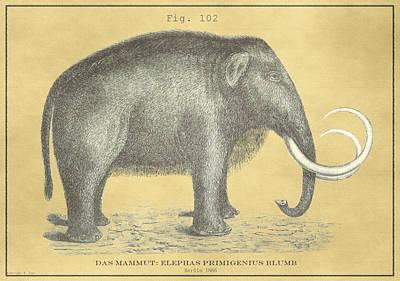 Drawing - Vintage Woolly Mammoth by Vintage Pix