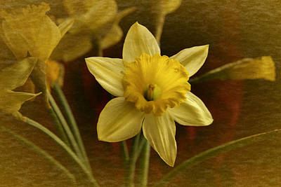 Art Print featuring the photograph Vintage Yellow Narcissus by Richard Cummings