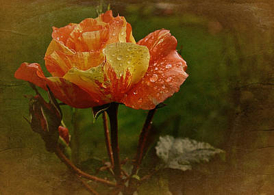 Vintage Sunset Rose Art Print