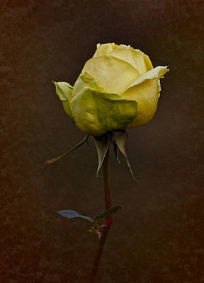 Photograph - Vintage Yellow Rose 2018 by Richard Cummings