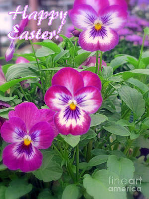 Photograph - Viola Happy Easter Card by Kay Novy