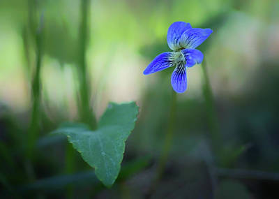 Photograph - Violet And Leaf by Nikolyn McDonald