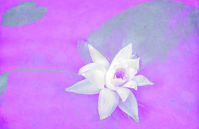 Violet And White Waterlily Art Print by Nat Air Craft