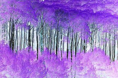 Photograph - Violet Aspens by Frank Townsley