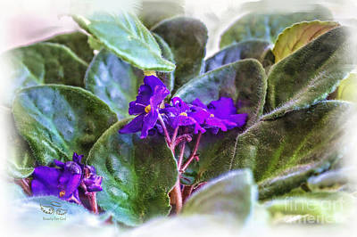 Photograph - Violet by Beauty For God