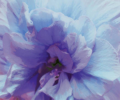 Photograph - Violet Blue Bloom by Rose  Hill
