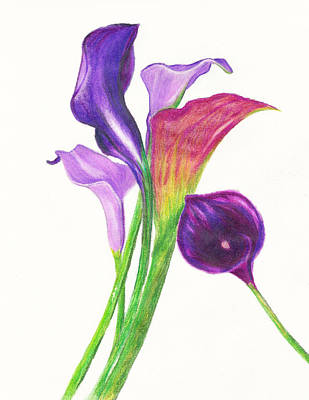 Lillies Drawing - Violet Calla Lillies by Candalis Escudero