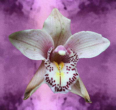 Mixed Media - Violet Colored Lauritzen Orchid by Dennis Buckman