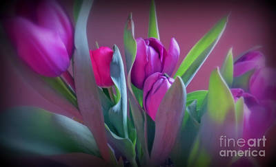 Photograph - Violet Colored Tulips by Kay Novy